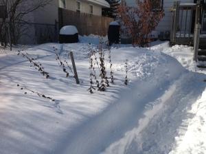 snowy herb spiral