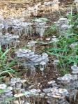 Mushroom bloom
