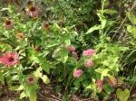 Sedum and zinnias