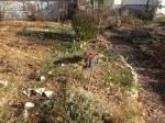 Fall in the vegetable garden