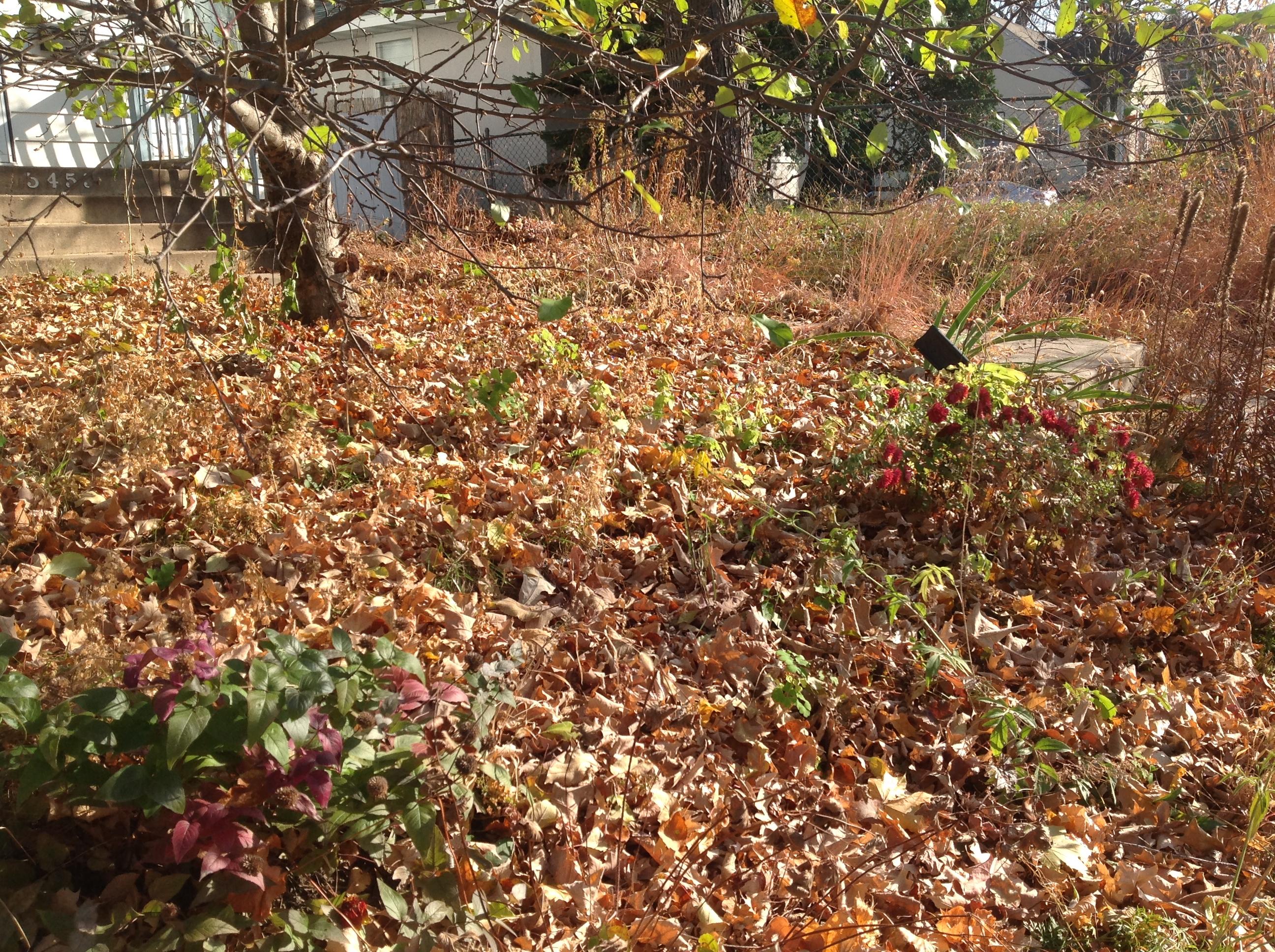 Late Fall Garden | Weeds