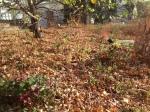 So many beautiful leaves