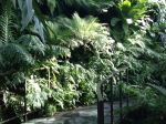 Green ferns - good for the soul