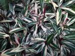 A pretty mystery plant