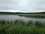 Rice Marsh lake