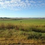 Fields of soybeans