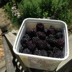 delicious black raspberries