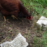 Elinor, first rate garden helper