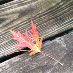Maple leaf on my deck