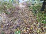 sidewalk-leaves