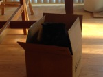 Dickens takes a turn in the box too