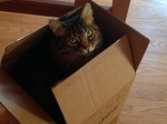Waldo enjoying the new yogurt maker box